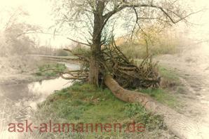 Baum am Weier